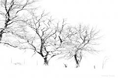 Landschaft-Natur-Funcke-16